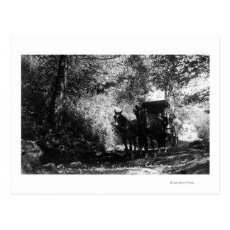 Chevaux de fret faisant une pause carte postale