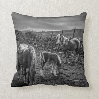 Chevaux et coussin de poney