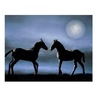 Chevaux faisant des amis par clair de lune carte postale
