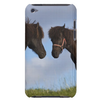 Chevaux islandais se faisant face coque barely there iPod