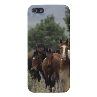Chevaux sauvages 2 de mustang coque iPhone 5