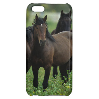 Chevaux sauvages 3 de mustang coques pour iPhone 5C