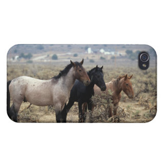 Chevaux sauvages 5 de mustang coques iPhone 4/4S