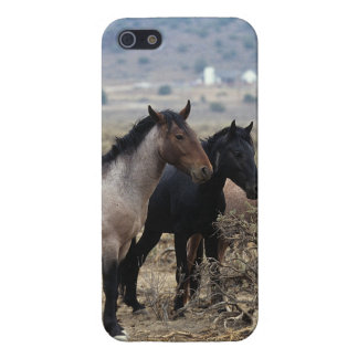Chevaux sauvages 5 de mustang coques iPhone 5