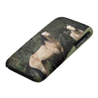 Chevaux sauvages 6 de mustang coques iPhone 3