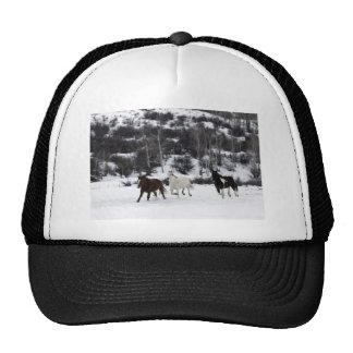 Chevaux sauvages casquettes