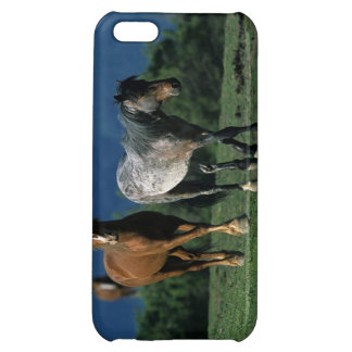 Chevaux sauvages de mustang coque iPhone 5C