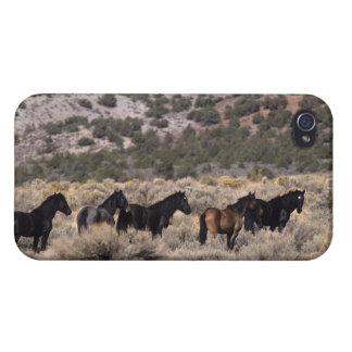 Chevaux sauvages de mustang dans le désert 2 coques iPhone 4/4S