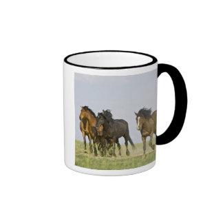 Chevaux sauvages sauvages 3 de caballus d'Equus de Mug
