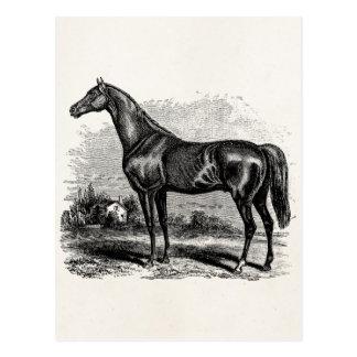 Chevaux vintages de pur sang de cheval de course carte postale