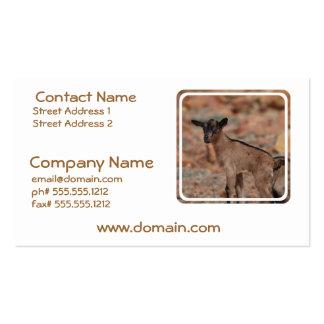 Chèvre de bébé modèle de carte de visite