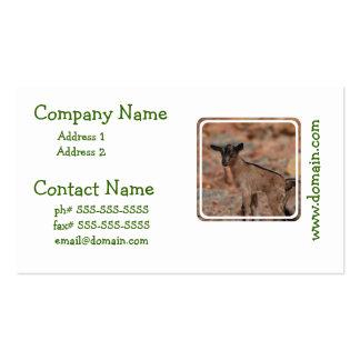 Chèvre de bébé carte de visite