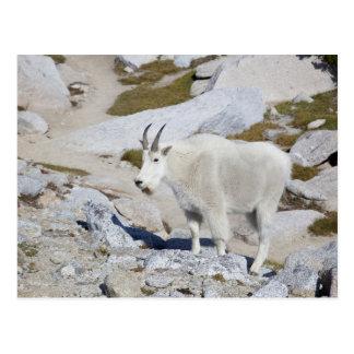 Chèvre de Billy, dans des enchantements supérieurs Cartes Postales