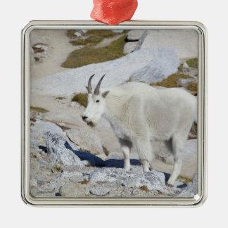 Chèvre de Billy, dans des enchantements supérieurs Ornement Carré Argenté