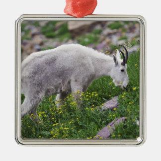 Chèvre de montagne, Oreamnos américanus, adulte Ornement Carré Argenté