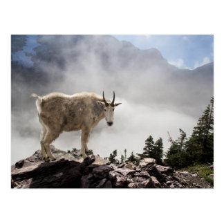 Chèvre de montagne sur la traînée de passage carte postale