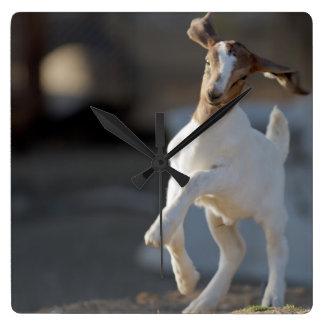 Chèvre d'enfant jouant en terre horloge carrée