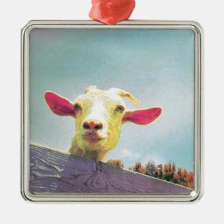 chèvre Rose-à oreilles Ornement Carré Argenté