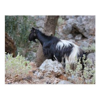 Chèvre sauvage crétoise cartes postales