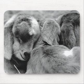 Chèvres de bébé tapis de souris