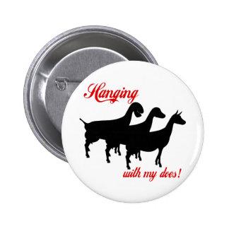 Chèvres de laiterie pin's
