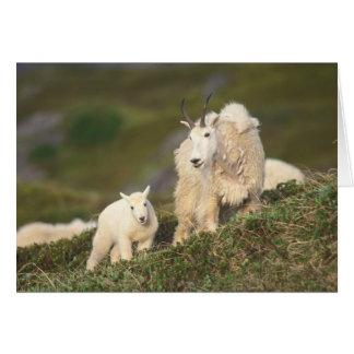 chèvres de montagne, Oreamnos américanus, mère et Carte De Vœux