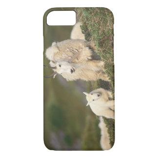 chèvres de montagne, Oreamnos américanus, mère et Coque iPhone 7