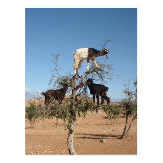 Chèvres drôles dans un arbre carte postale