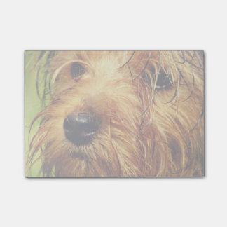 Chien adorable de Terrier avec un visage humide