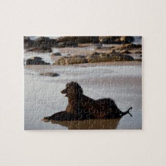 Chien afghan dans la plage de Deba, Guipuzcoa, Puzzle