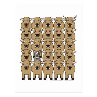 Chien australien de bétail dans le troupeau carte postale
