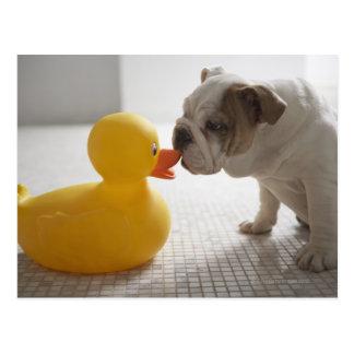 Chien avec le canard en plastique carte postale