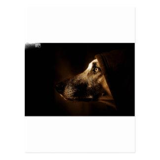 chien carte postale