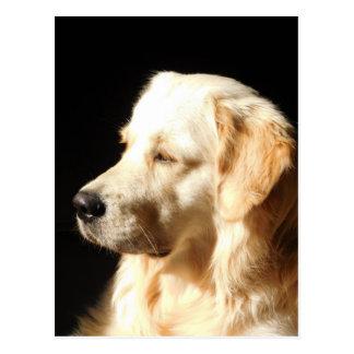 chien cartes postales