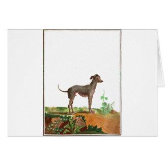 Chien - chien chauve cartes