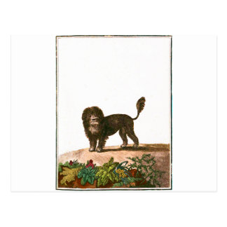 Chien - chien de lion carte postale
