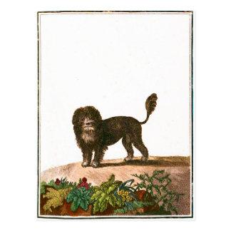 Chien - chien de lion cartes postales