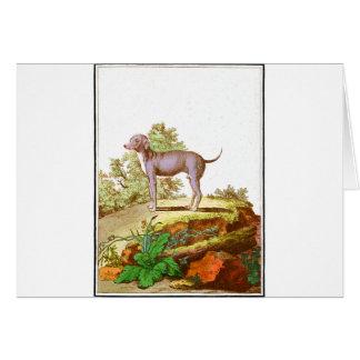 Chien - chien turc cartes de vœux