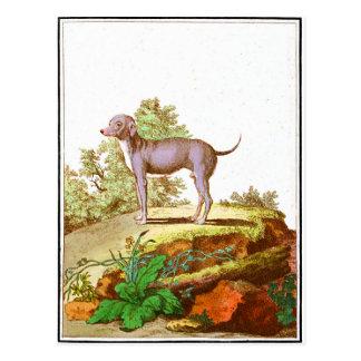 Chien - chien turc cartes postales
