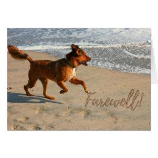 Chien courant d'adieu de retraite sur la plage cartes