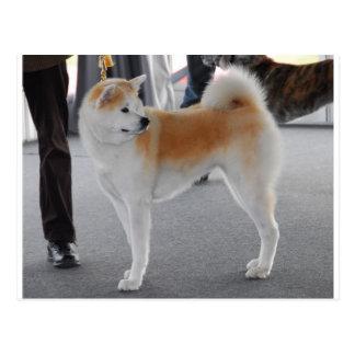 Chien d'Akita Inu dans une exposition canine Carte Postale