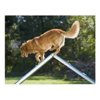 chien d'arrêt de canard-tintement de la carte postale