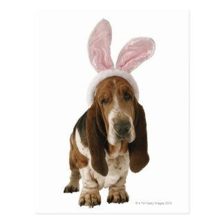 Chien de basset avec des oreilles de lapin carte postale