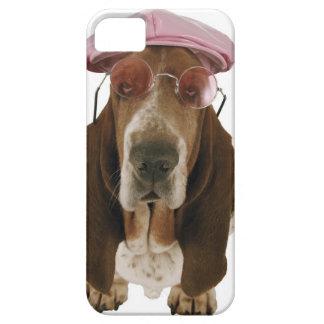 Chien de basset dans les lunettes de soleil et le étui iPhone 5