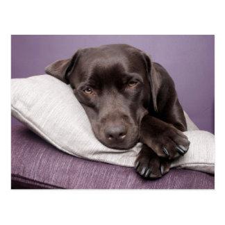 Chien de labrador retriever de chocolat somnolent carte postale