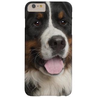 Chien de montagne de Bernese (de 1 an) Coque Barely There iPhone 6 Plus