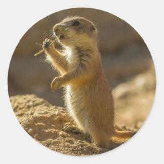 Chien de prairie de bébé mangeant, Arizona Sticker Rond