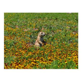 Chien de prairie en fleurs carte postale