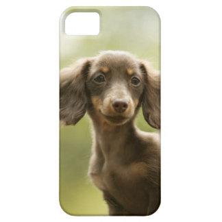 Chien de saucisse (brun) coques Case-Mate iPhone 5