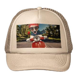 Chien de scooter, cric Russell Casquettes De Camionneur